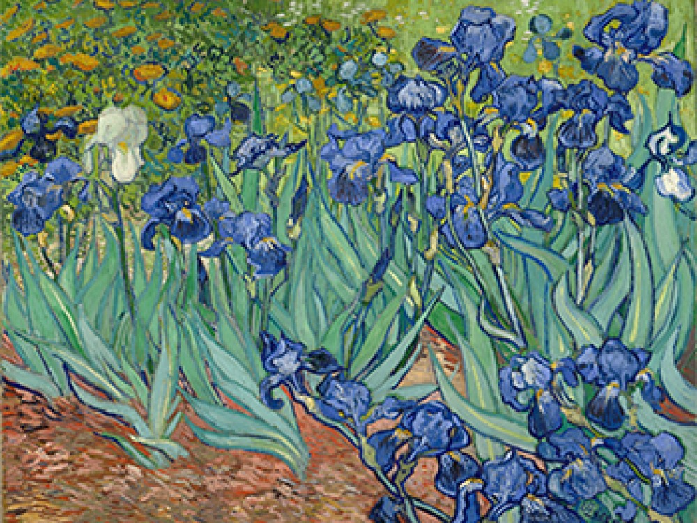 Irysy Vincenta van Gogha