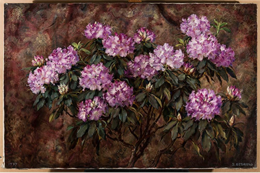 Rododendrony Stanisław Ejsmond