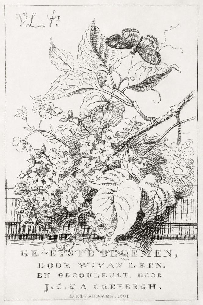 Obraz na płótnie Studium kwiatowe z nadrukiem motyla Willema Van Leena